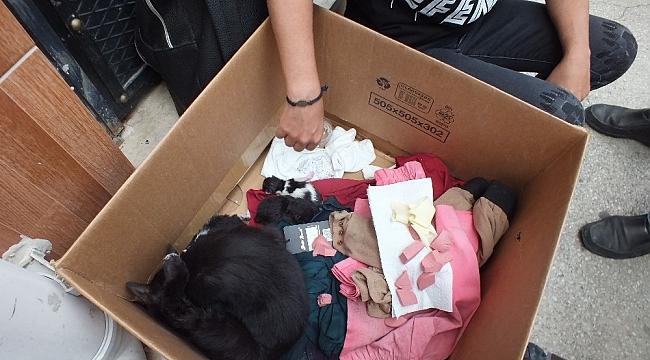 Okulda yavrulayan kediyi görünce şaşkınlık yaşadılar - Bursa Haberleri
