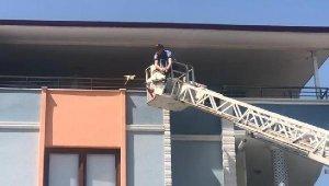 Papağan 'Ciguli', komşunun balkonuna kaçtı - Bursa Haberleri
