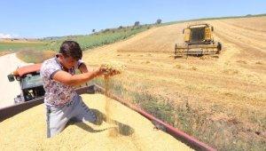 Yağmurun sona ermesiyle hasat yeniden başladı - Bursa Haberleri