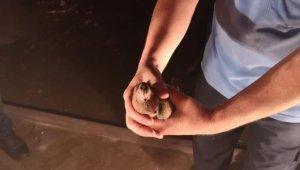 Yangında mahsur kalan güvercin kurtarıldı - Bursa Haberleri