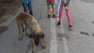 Yaralı köpeğe önce çocuklar, sonra belediye sahip çıktı