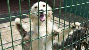 Hayvanseverler barınakta bir araya geldi - Bursa Haberleri