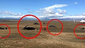 Helikopter turunda tesadüfen gördü