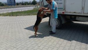 Karşıdan karşıya geçemeyen köpeğin yardımına koştular - Bursa Haberleri