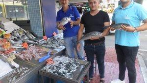 Mudanya'da balık fiyatları cep yakıyor - Bursa Haberleri