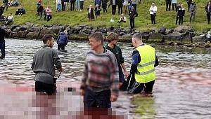 Tepkiler çığ gibi büyüyor... Yüzlerce balina hunharca katledildi