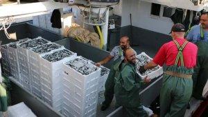 Av yasağı bitti, balık bollaştı - Bursa Haberleri