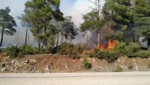 Bursa'da orman yangını...Çam ağaçları yanıyor - Bursa Haberleri