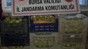 Bahçeden 300 kilo armut çaldılar - Bursa Haberleri