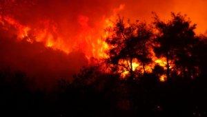 Bursa'da çıkan orman yangını 4 saatte kontrol altına alındı - Bursa Haberleri