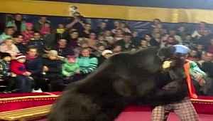 Canı yanan ayı, terbiyecisine saldırdı