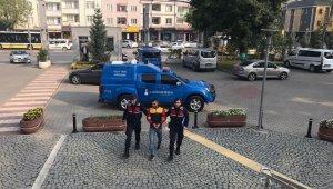 Jandarma hırsızı gizlendiği ağaç kovuğunda yakaladı - Bursa Haberleri