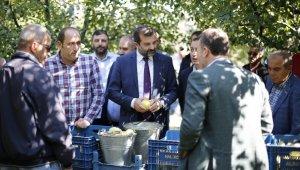 Kadına şiddete dikkat çektiler, Belediye Başkanı ve muhtarlar armut topladı - Bursa Haberleri