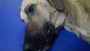 Kazada yaralanan köpeğin gözyaşları - Bursa Haberleri