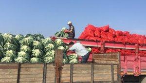 Kışlık ürünlerde çiftçiyi tatmin etmedi - Bursa Haberleri