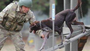 Sınır ötesi operasyonlara yerli ırk köpek - Bursa Haberleri
