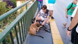 Vicdansız sürücünün çarpıp kaçtığı köpeğe yoldan geçen gençler sahip çıktı