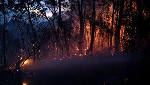 Avustralya'da korkutan orman yangınları