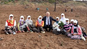 Başkan Davut Aydın, mevsimlik işçilerle fidan dikti - Bursa Haberleri
