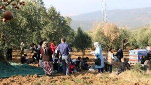 Çocuklar zeytin toplama heyecanı yaşadı - Bursa Haberleri
