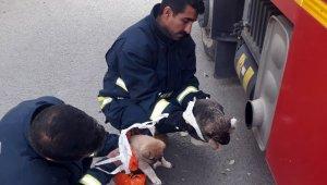 Dereden kurtarılan yavru köpekler araç egzozuyla ısıtıldı