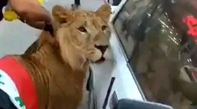 Göstericiler, köpeklere karşı meydana aslanla getirdi