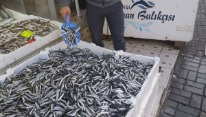 Hamsi fiyatı Karadeniz'de 7 TL'ye düştü