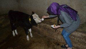 Hayvanlarına kahve ikram ediyor - Bursa Haberleri
