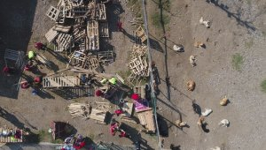İşte Türkiye'deki köpek gerçeği... Yüzlercesi sokağa terk edildi - Bursa Haberleri
