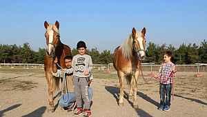 İzmir'in fayton atları ikinci baharlarını Bursa'da yaşıyor - Bursa Haberleri