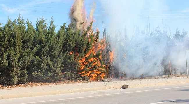 Kaynak kıvılcımı çam ağaçlarını yaktı - Bursa Haberleri