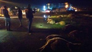 Koyun sürüsüne otomobil çarptı: 15 koyun telef oldu