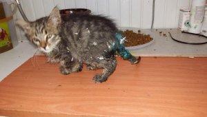 Ölmek üzere olan yavru kedinin büyük değişimi - Bursa Haberleri