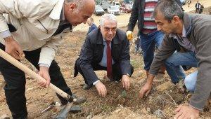 Orhaneli'de 63 bin fidan topraklı buluştu - Bursa Haberleri
