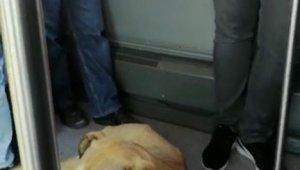 Sevimli köpeğin metrobüs yolculuğu kamerada