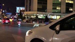 Trafiği durdurup, yaya geçidinde bekleyen köpeği yolun karşısına geçirdi