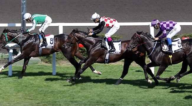 Türkiye Varlık Fonu, at yarışları için harekete geçti