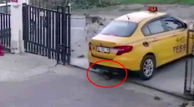 Vicdansız sürücüsü yavru köpeğin üzerinden geçti