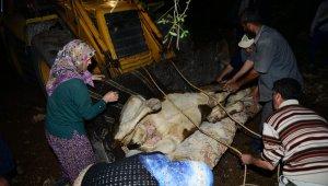Yamaçtan düşerek arka ayakları kırılan inek için kurtarma operasyonu