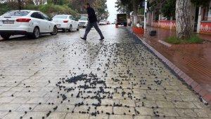 450 kilo zeytin yola saçıldı - Bursa Haberleri