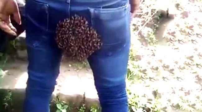 Arı sürüsü işçinin kalçasına dadandı