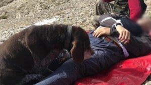 Avcı dağda hayatını kaybetti, köpeği başından ayrılmadı