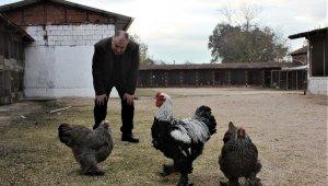 Her ülkeden nadir tavukları getirdi, şimdi bütün dünyaya satıyor - Bursa Haberleri