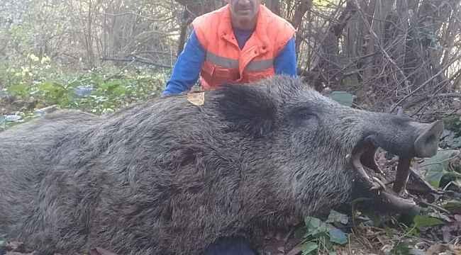 İnegöl'de avcılar 316 kiloluk yaban domuzu vurdu - Bursa Haberleri