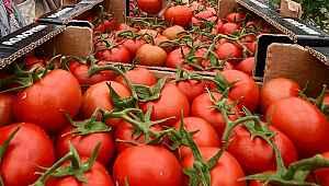 Rusya'da domates ithalatına sınırlama önerisi