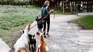 Şeyma Subaşı, sevgilisinin kız kardeşinin keçilerini gezintiye çıkardı