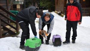 Uludağ'da yavru köpekler donmaktan kurtarıldı - Bursa Haberleri