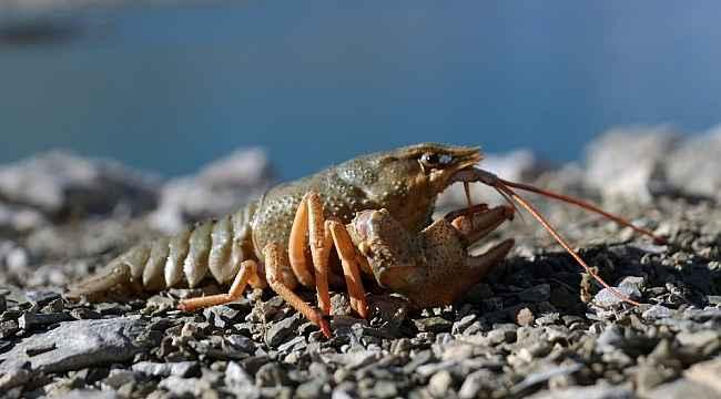 Van Gölü Havzası'nda 600 bin yıldan sonra ilk kez görüldü