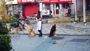 Vatandaşın süpürge ile masaj yaptığı köpeklerin iç ısıtan halleri