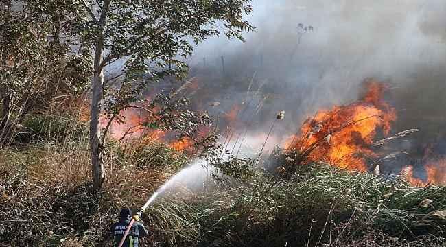 Antalya'da sazlık yangını... Evler tedbir amaçlı tahliye edildi